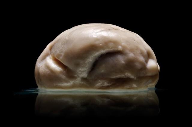 strange human brain 2