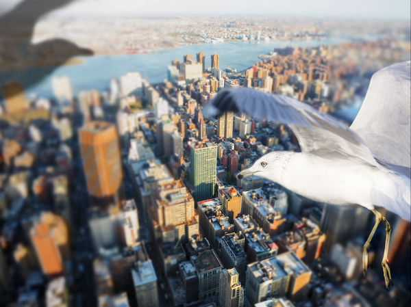 1 City Views Chicago Skyline USA