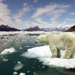 Al Gore on climate change – We are winning this!