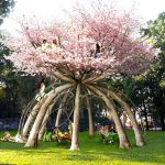 Arborosculpture: Beautiful artworks made from living trees.
