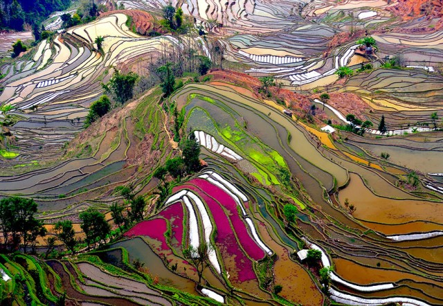 14 City View Terraced Rice Fields China
