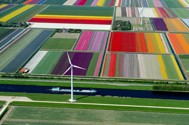2 City View Tulip Fields The Netherlands